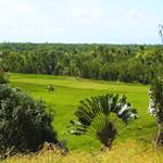 randonnée-palmier-endémique- ravenala-rizière-les villas de Sainte-Marie-Madagascar