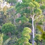 randonnée-botanique-forêt-kalalao 2-les villas de Sainte Marie-Madagascar