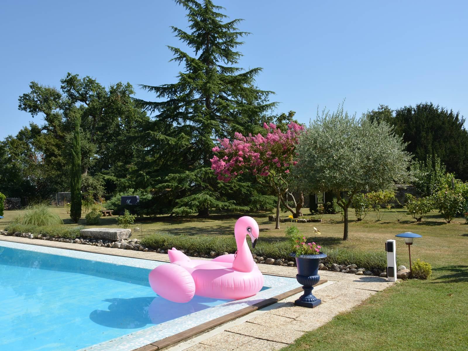 un cygne rose s'est posée sur la piscine