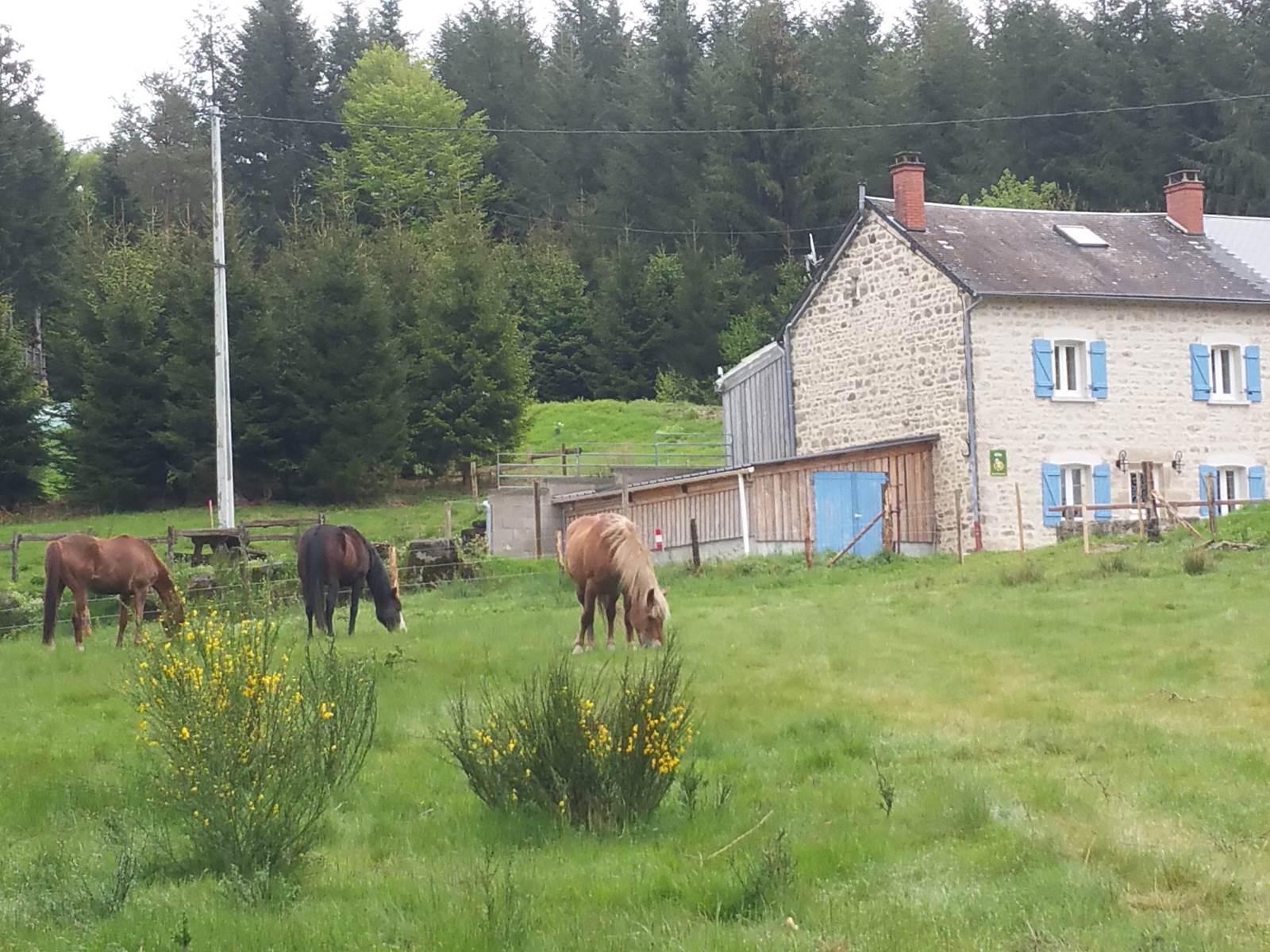 Le Puy des Bruges gîte 8 personnes à Royère de Vassivière (Creuse)