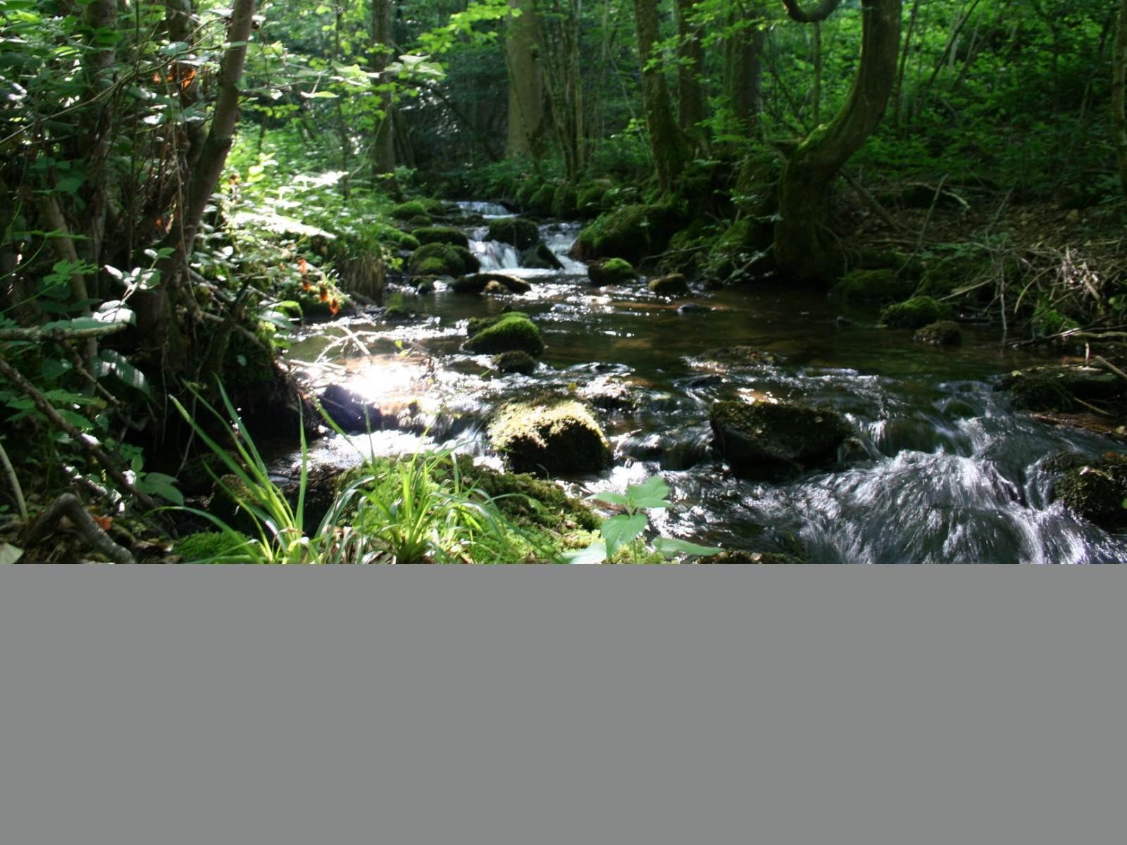 Ruisseau le Récourt traversant la propriété