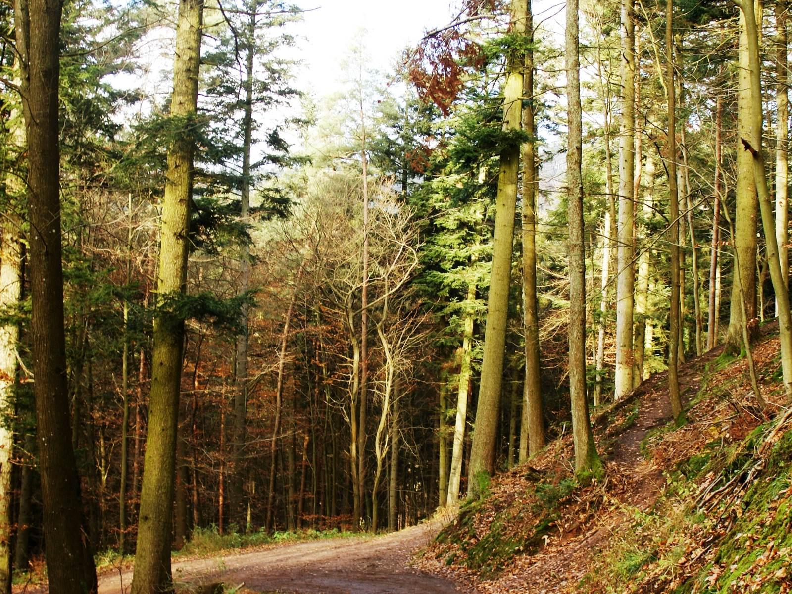 les Sentiers de Randonnée