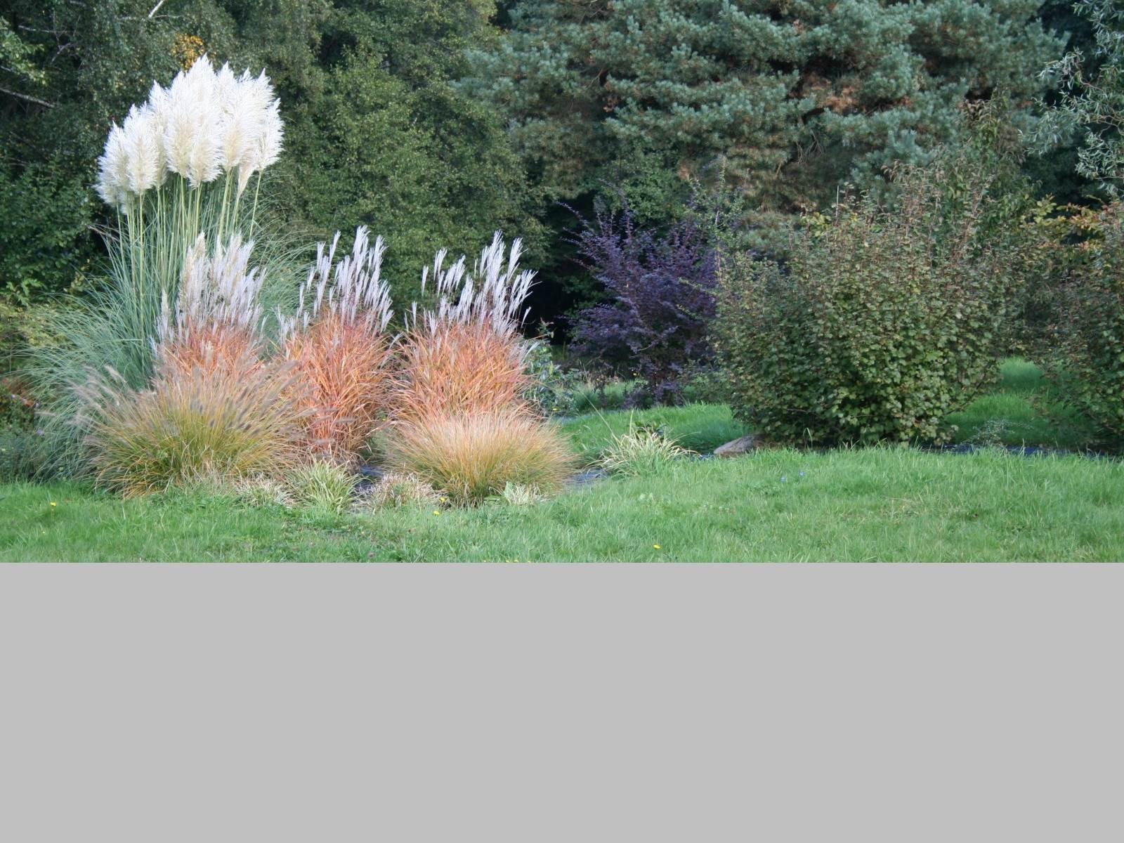 Le jardin d'agrément, les Herbes de pampa