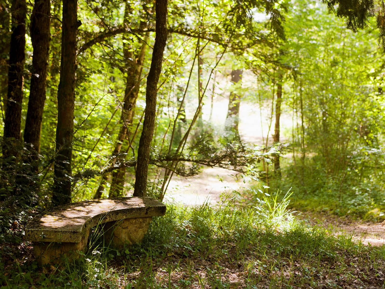 Coin secret dans les bois privés de la Chartreuse du Maine