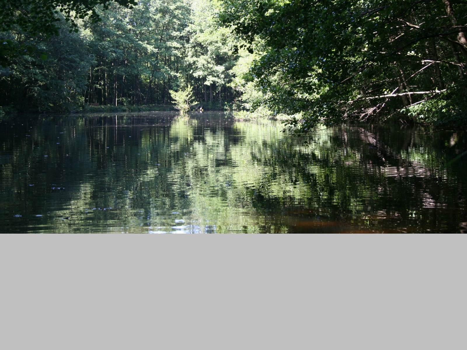 Un étang calme,sauvage la Chapelle aux bois