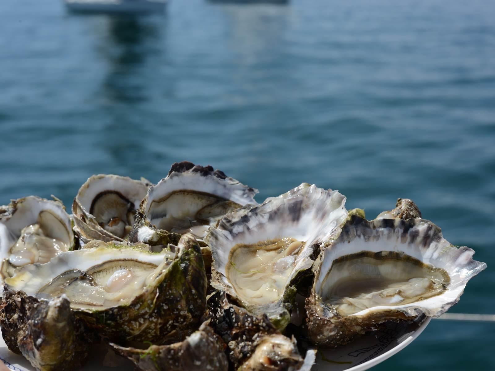 Plateau d'huîtres en croisière