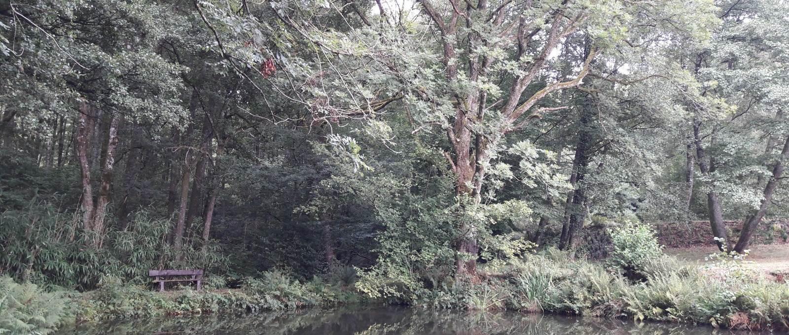 Venez vous ressourcer sur le banc au bord de l'étang à poisson rouge à l'ombre d'une haie de bambous
