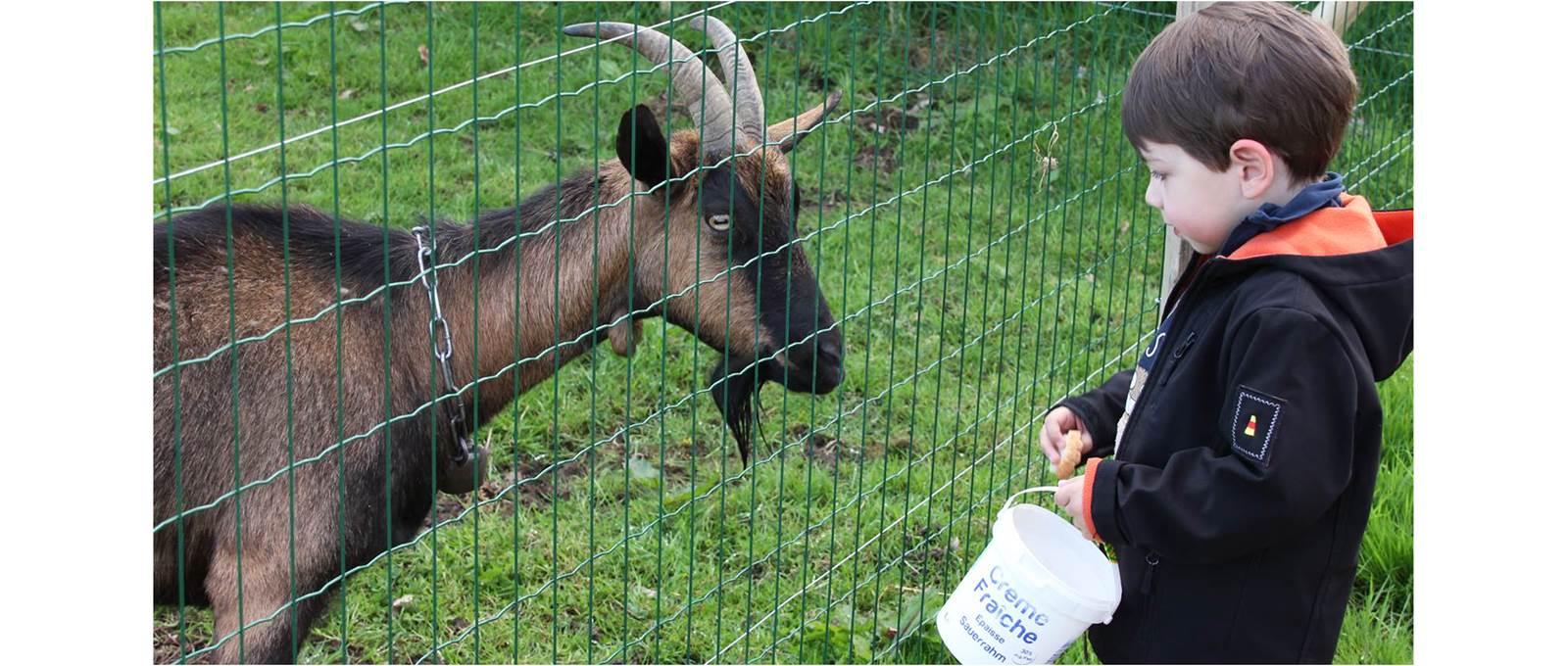 Participez au nourrissage des animaux