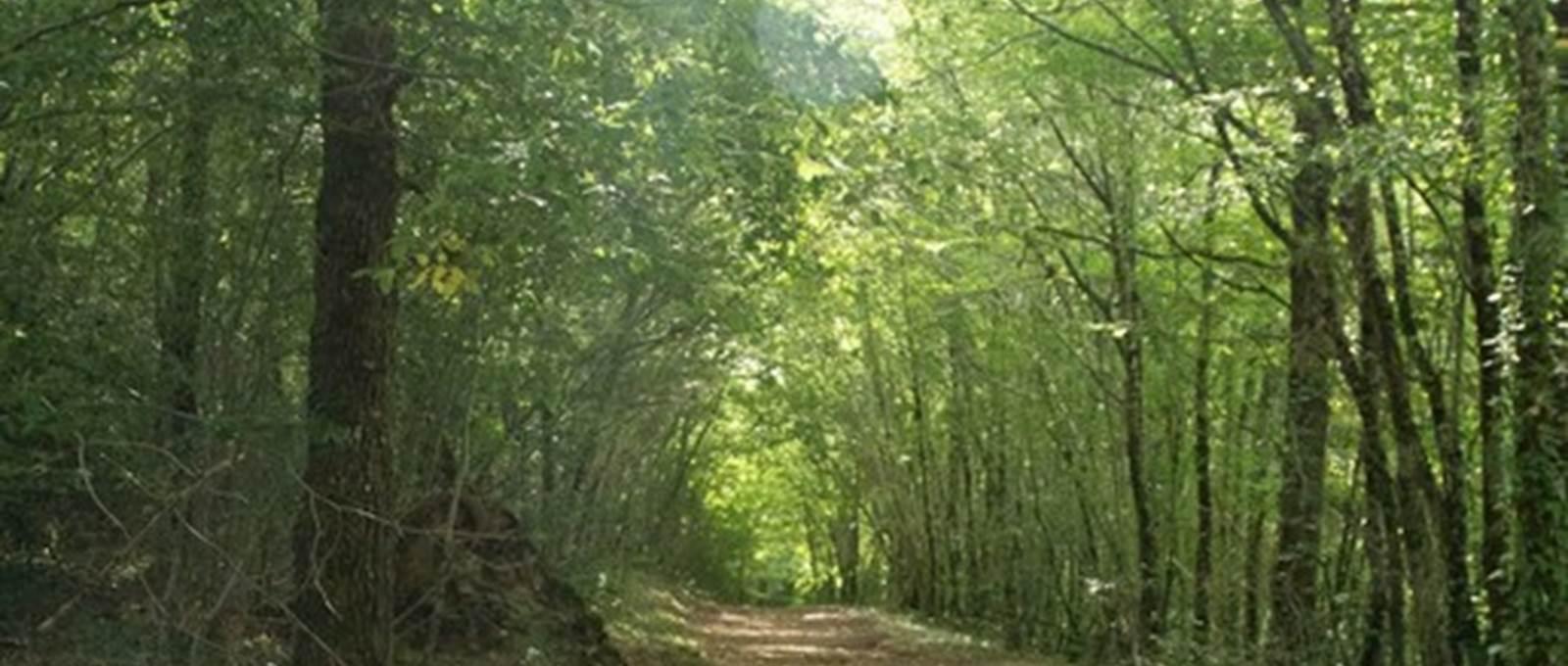 le temps de prendre le temps dans nos bois