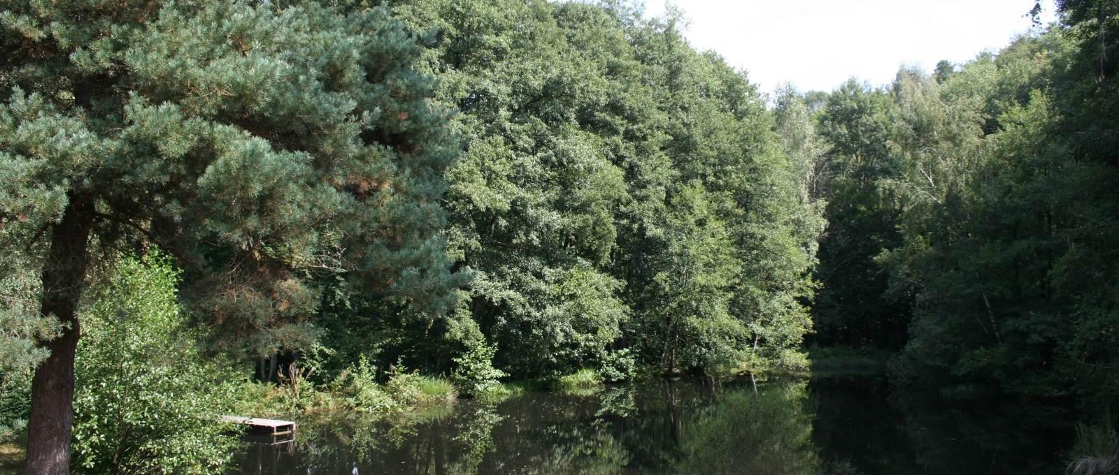 Pêche ou sieste il faudra choisir à l'étang « la Landre » Chambres et table d'Hôtes « La Landre » la Vôge les Bains, Bains les Bains, Le Clerjus.