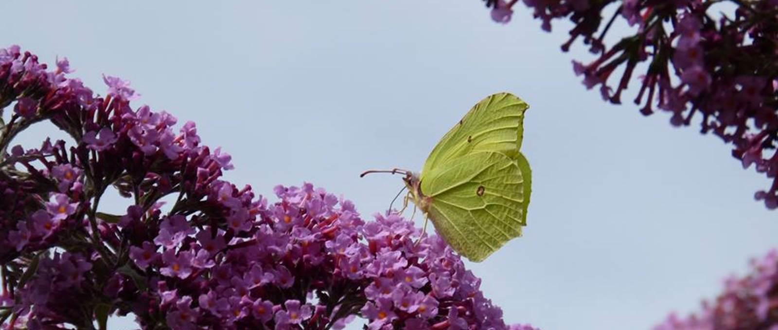 La délicatesse d'un papillon
