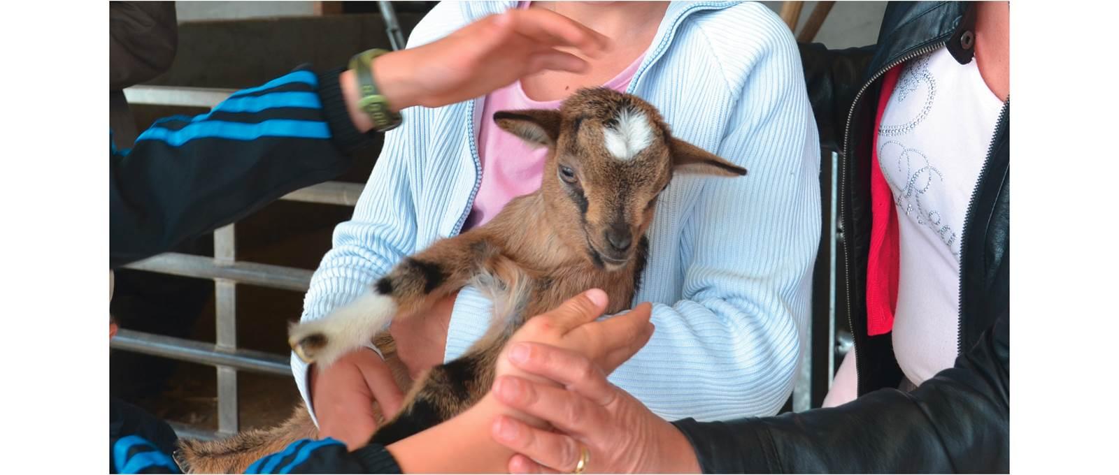 Les enfants sont au contact direct des animaux à la ferme du Botrai