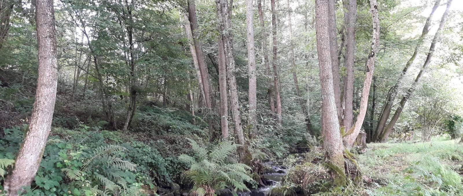Vous pourrez profiter d'un ruisseau sauvage « le Récourt » qui sinue sur la propriété. Gîte, Chambres, Table d'Hôtes La Landre La Vôge les Bains, Bains les Bains, Le Clerjus