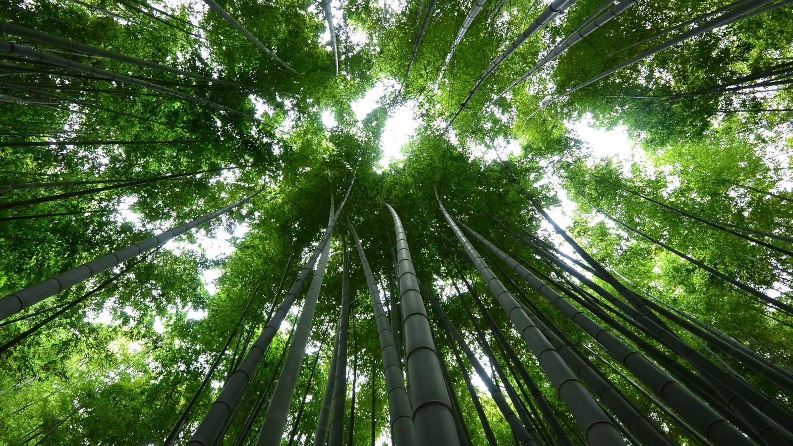 Anduze et la Bambouseraie de Prafrance