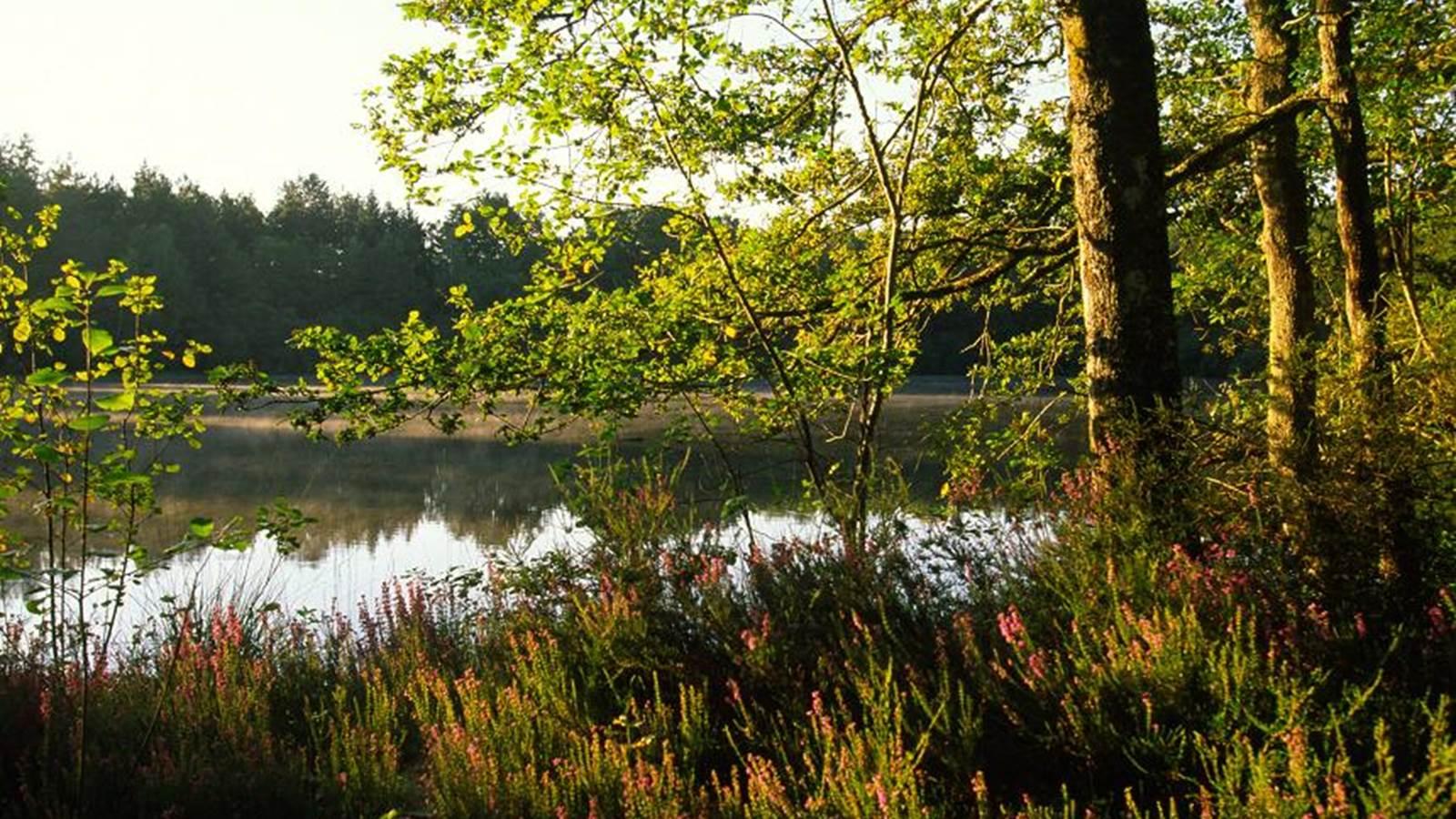 La Sologne, région naturelle forestière