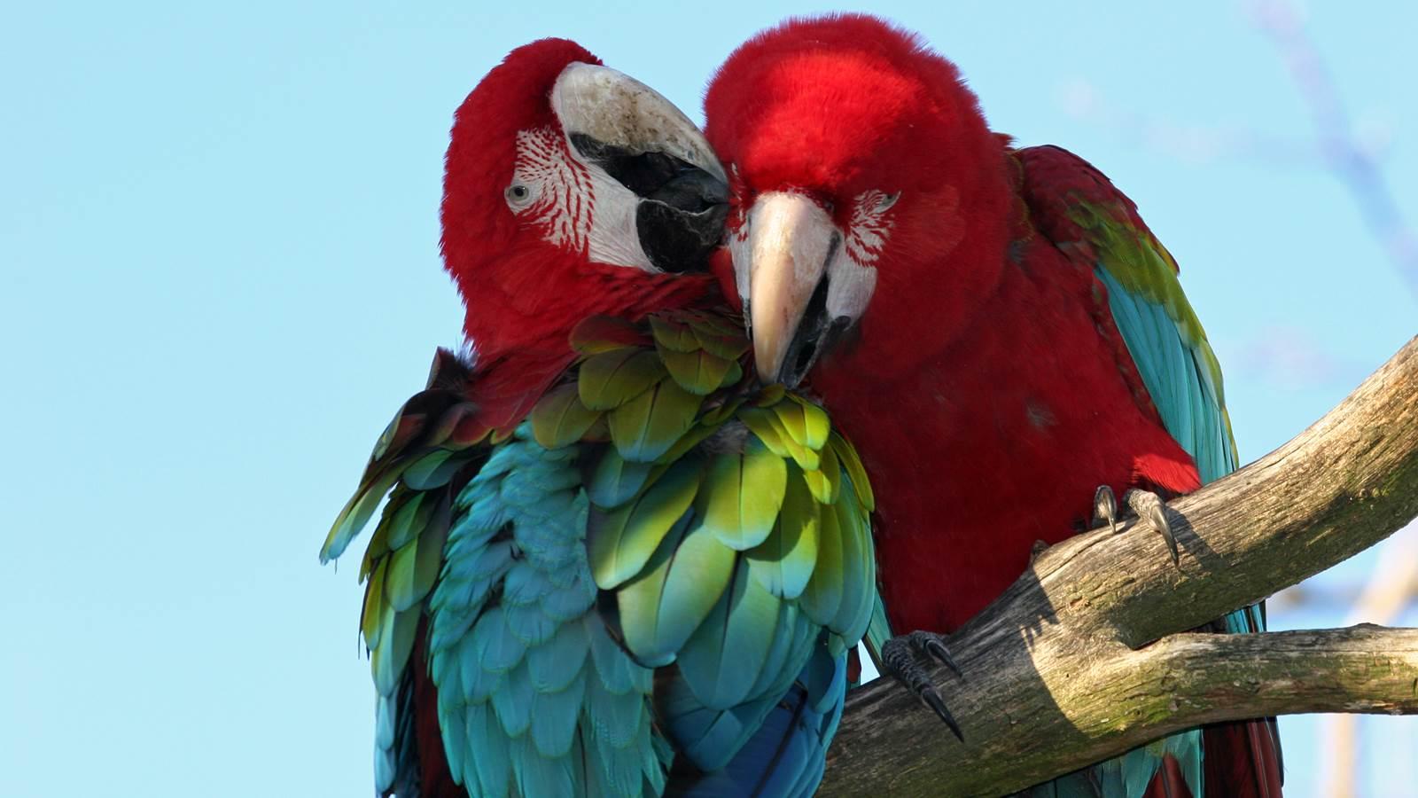 Le Parc des Oiseaux, réserve naturelle ornithologique au pays des mille étangs : la Dombes