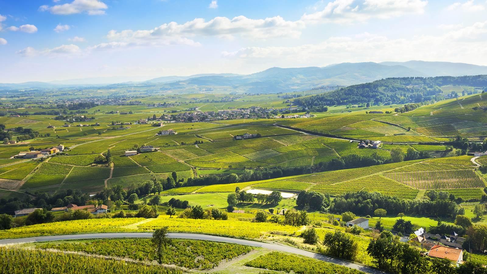 Le Beaujolais, pays de vigne et de villages aux pierres dorées