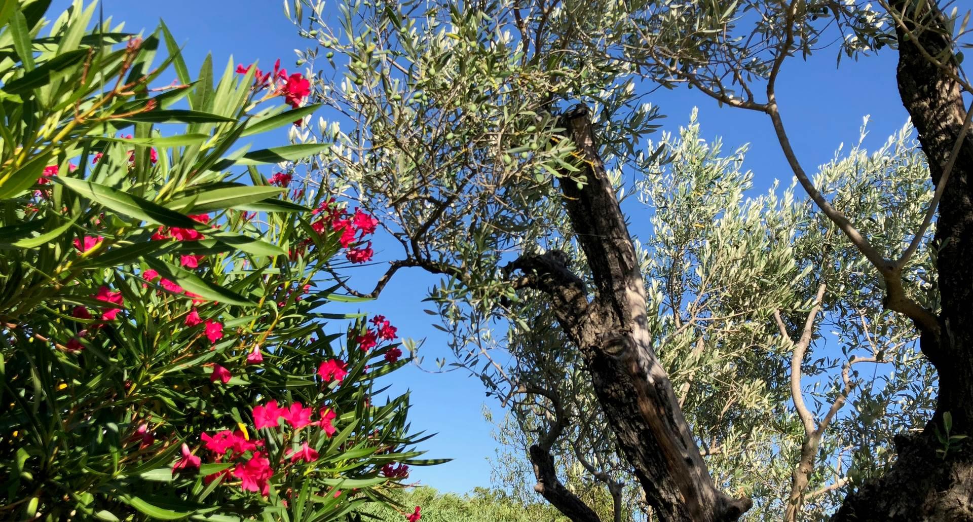 olivier et laurier