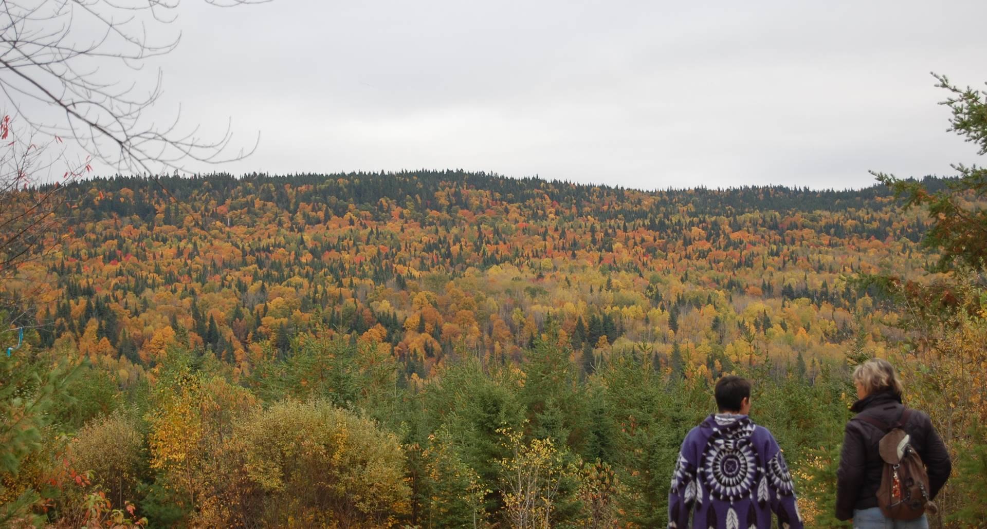 Domaine le Bostonnais, une petite marche dans le bois en automne, Hébergement La Tuque, Mauricie, Canada