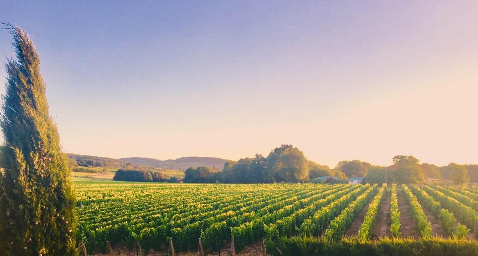 Le Clos Des Anges  vue magnifique sur le Beaujolais