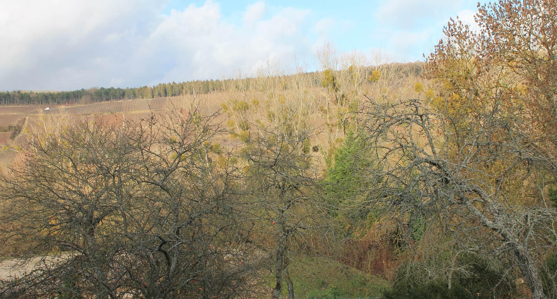 Jardin avec vue sur le vignoble de Villers sous Chatillon