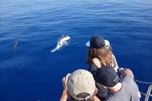 safari dauphins cocoboat