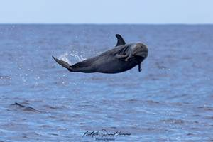 sortie dauphins 974 isabelle p by cocoboat