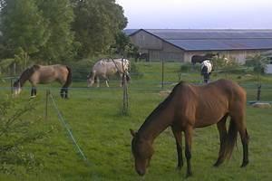 Etape d'un soir pour des cavaliers