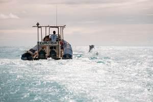 cocoboat observation des dauphins à st gilles les bains 974 La Réunion