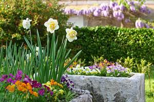 Jardin privatif fleuri de la Cuisine d'Alice