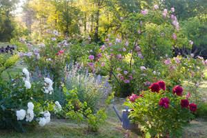 Jardin de pivoines et de roses de La Chartreuse du Maine, Dordogne-Périgord