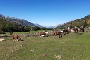 chevaux sur le plateau