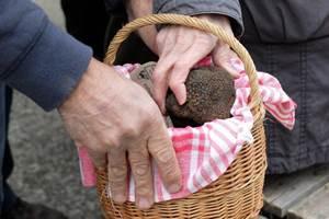 Marché aux truffes
