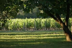 La parcelle de vignes du Château La Gravière
