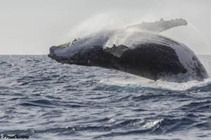 maman baleine saut 2 FB