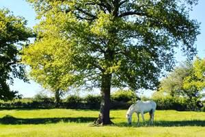 cheval pre´