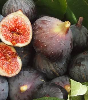 Pour se détendre, quelques idées de recettes pour les amateurs de figues !