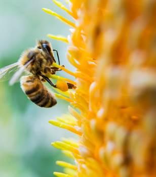L'importance de la biodiversité dans nos jardins