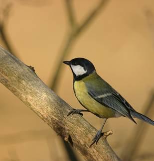 A l'écoute des oiseaux de la Réserve Naturelle de la Pointe de Givet