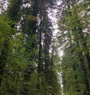 Découverte des pouvoirs de la nature : la forêt