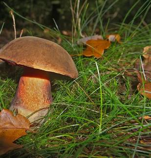 Les champignons de la Réserve Naturelle de la Pointe de Givet