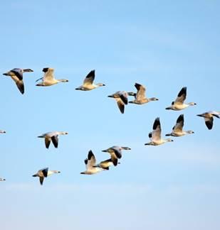 Suivi de la migration des oiseaux 2018