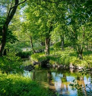 La vallée boisée de la Houille