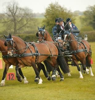 Concours d'attelage tous chevaux