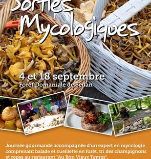 Visite Estivale - Sorties Champignons