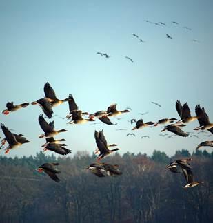 RDV avec le Parc : Migration des oiseaux