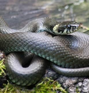 Ciné-débat : Des serpents dans nos têtes