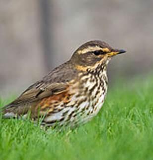 Sortie Natura 2000 :