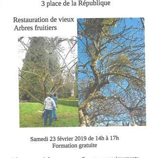 Animation Croqu'Ardenne: restauration de vieux arbres fruitiers