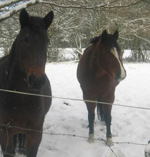 Centre Equestre de Marlemont